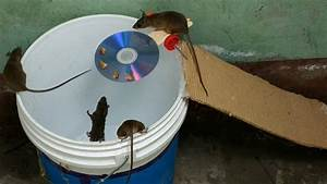 Bucket Mouse Trap The Best Mouse Trap I U0026 39 Ve Ever Seen