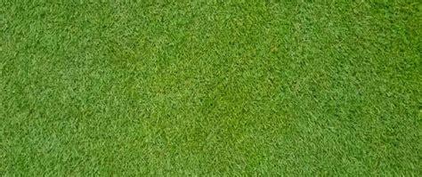 Semillas Pasto Bermuda Triangle Certificada Sin Cascara
