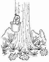 Maple Syrup Tree Coloring Activities Pages Homemade Sugaring Drawing Sugar Tap Crafts Sucre Sap Taps Preschool Colouring Cabane Printables Sheets sketch template