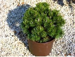 Winterharte Pflanzen Für Balkonkästen : pflanzen kaufen balkonpflanzen zimmerpflanzen obstb ume harro 39 s pflanzenwelt ~ Orissabook.com Haus und Dekorationen