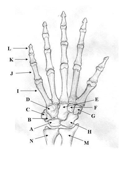 bones   upper limb quiz proprofs quiz