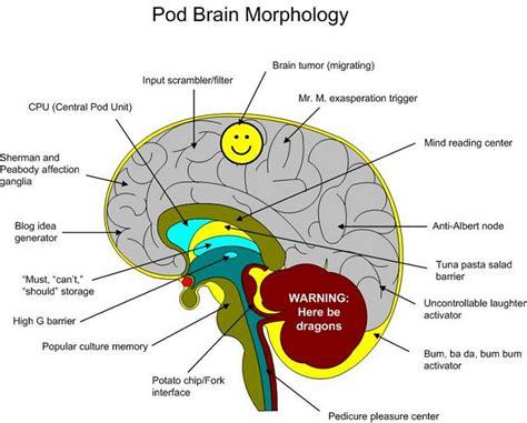 Label Brain Diagram by Brain Image Brain Diagram