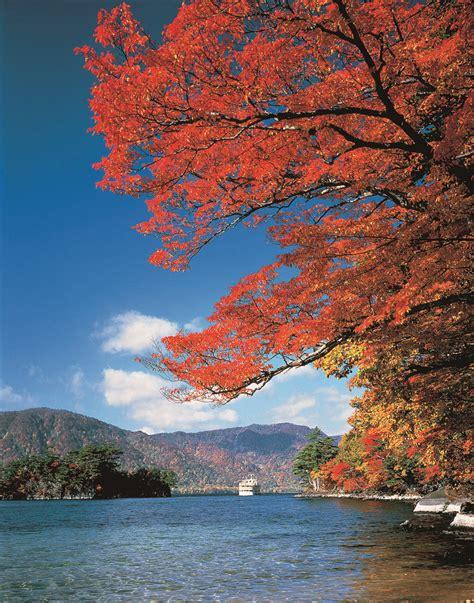 fall leaves  lake towada aptinet aomori sightseeing guide