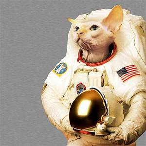 Cat as Astronaut - Pics about space