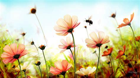 Summer Flowers Wallpapers Pixelstalknet