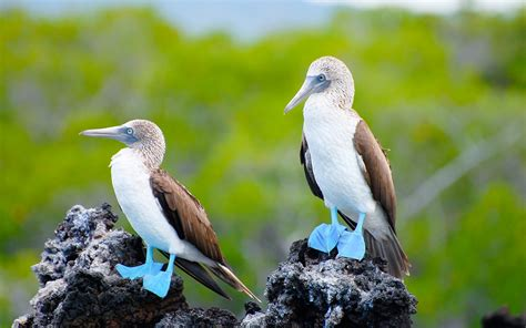 How To Travel To The Galápagos Islands Travel Leisure