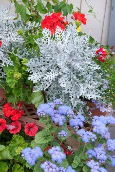 Recipes Patriotic Planting by 1000 Images About Patriotic Gardens On
