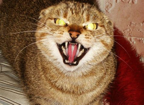 evil cats most cat ever demonic possessed night he ll lolwot youll