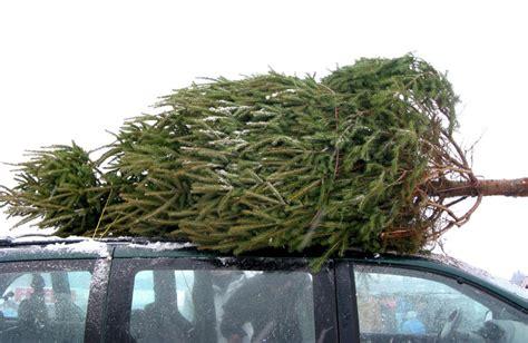 christmas tree farms in martinsburg wv