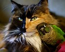Image result for birds and cats