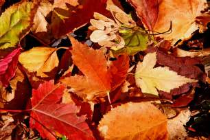 autumn 24 management