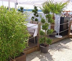 bambus als sichtschutz fur terasse und balkon bambuswald With pflanzen sichtschutz terrasse