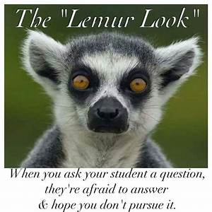 Lemur look | Em... Cute Lemur Quotes