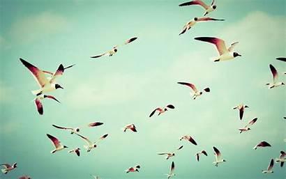 Flying Birds Background Wallpapers Bird Flight Resolution