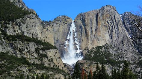 Backyard Birding Nature Upper Yosemite Falls