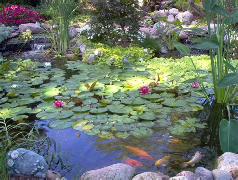 Aquascape Ecosystem by Fish Koi Pond Builder Installer Downers Grove Dupage