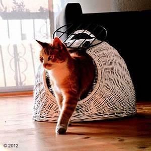 Panier Osier Chat : aum ller panier de transport pour chat et petit chien zooplus ~ Teatrodelosmanantiales.com Idées de Décoration