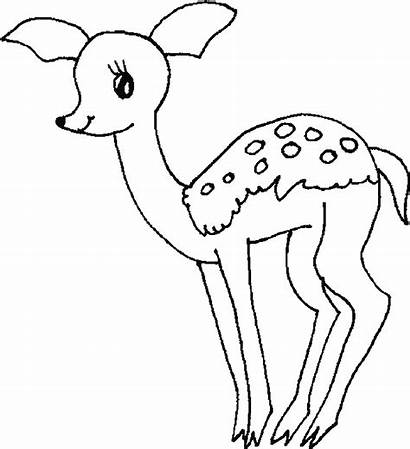 Deer Coloring Pages Printable Colouring Clipart Enjoyable