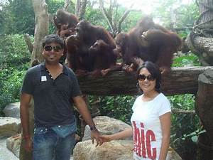 breakfast with orangutans - Picture of Singapore Zoo ...