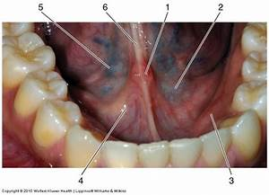 The Oral Cavity at University of Maryland Baltimore School ...