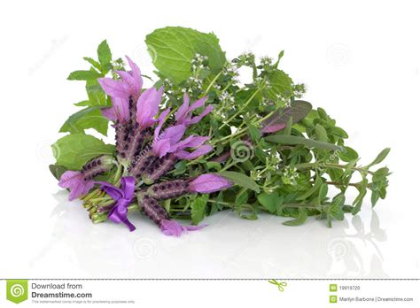 herb florist medicinal flower and herb leaves stock photo image 19919720