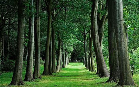 Dark green forest id 49095. Green Forest Wallpapers (75+ background pictures)