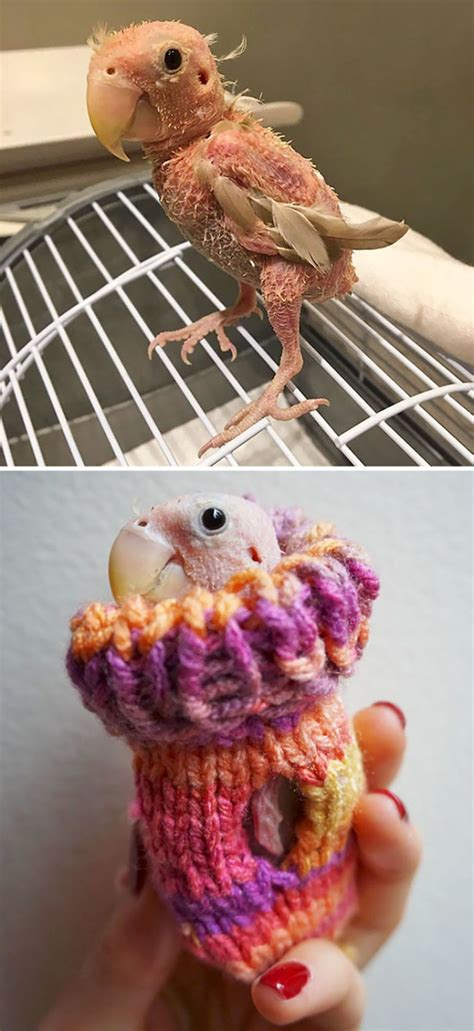 tiny animals  tiny sweaters      aww