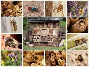 Tiere Im Insektenhotel : erstellen eines insektenhotels ~ Whattoseeinmadrid.com Haus und Dekorationen