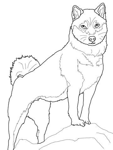 shiba inu coloring page  printable coloring pages