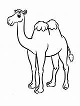 Camel Coloring Pages Animal Animals Printable Recommended Colors sketch template