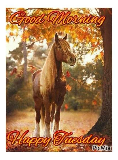 Tuesday Morning Horse Happy Horses Gifs Lovethispic