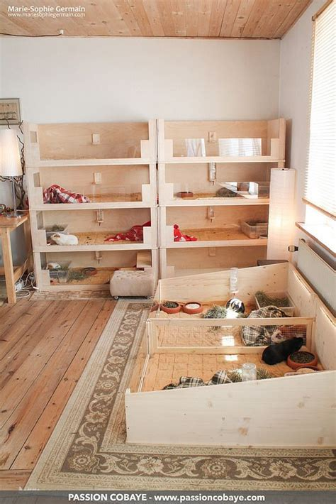 guinea pig hutch size best 25 guinea pig cages ideas only on guinea