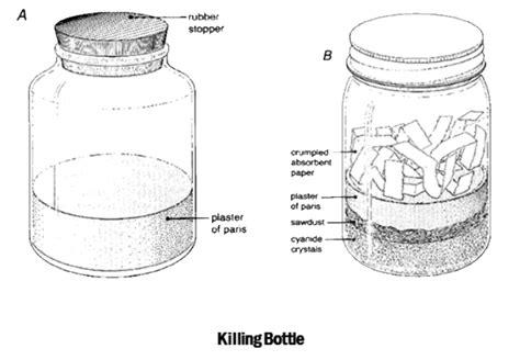 koleksi dan pengawetan serangga