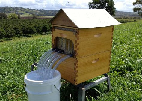 Backyard Honey Bee Hive by New Beehive Harvests Honey Without Bugging Bees Pictures