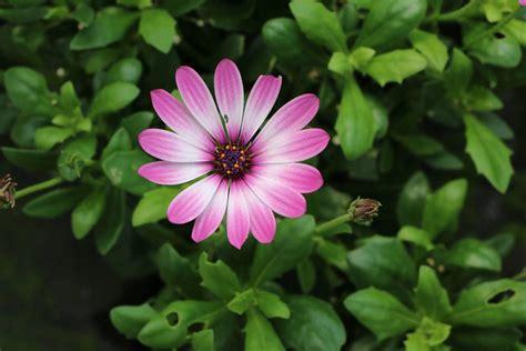 Balkonpflanzen Pflegeleicht Robust by Pflegeleichte Balkonpflanzen 11 Sch 246 Ne Und Robuste