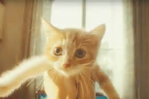 world s cutest cat gaming attention this gravity 2 trailer the