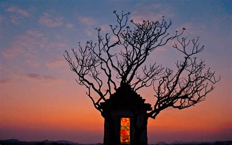 house tree  treehouse temple india beautiful