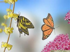 3 Ways To Feed Butterflies