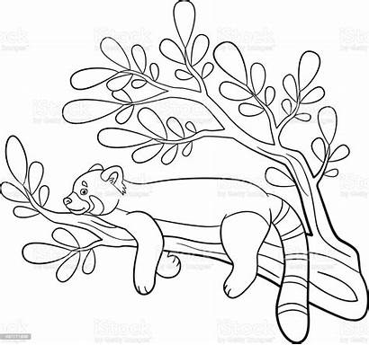 Panda Coloring Pages Smiles Vector Illustration Animal