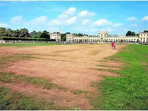 Trockene Stellen Im Rasen : gelbe flecken sind erbe der d 12 kassel ~ Markanthonyermac.com Haus und Dekorationen