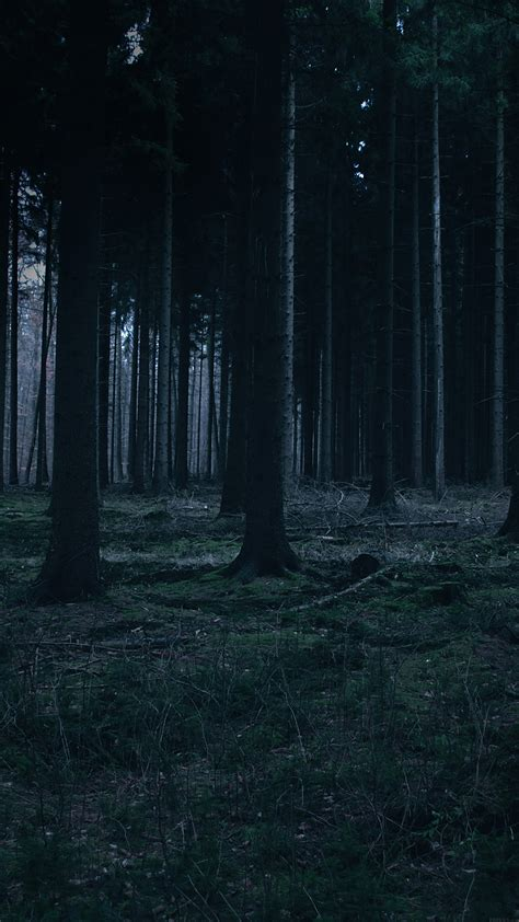 Download the best hd and ultra hd wallpapers for free. mj52-forest-dark-night-trees-nature - Papers.co