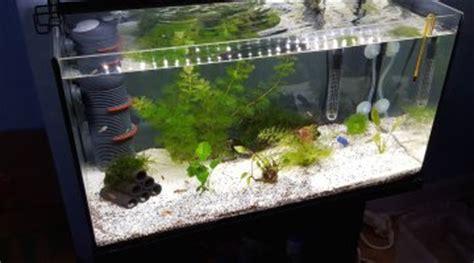 ph trop haut aquarium eau douce