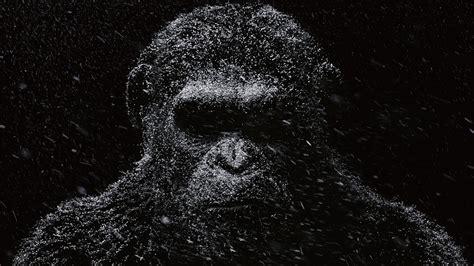 wallpaper monyet gelap  kerstel
