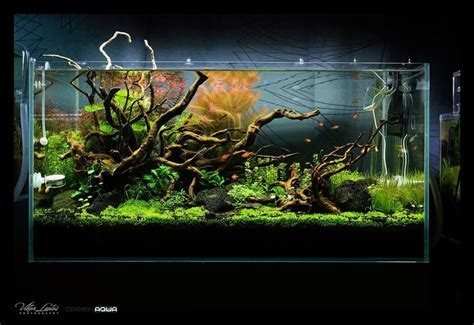 aquascaping supplies 1000 images about aquarium scape on forests