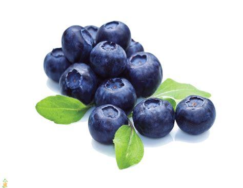 Southern Highbush Blueberry Bush