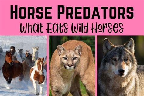 horses predators wild horse eats games play virtual barn