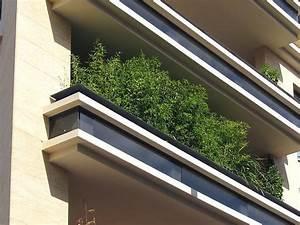 die besten 25 bambus im kubel ideen auf pinterest With französischer balkon mit bambus japanischer garten