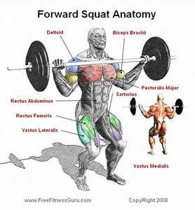 Front Squat Anatomy