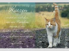 Die schönsten Katzensprüche Spruchbilder, Katzenzitate