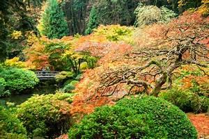 Plante Pour Jardin Japonais : buis et rable du japon incontournables cr er un jardin ~ Dode.kayakingforconservation.com Idées de Décoration